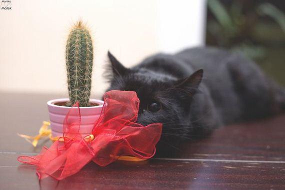 black-cat-superstition