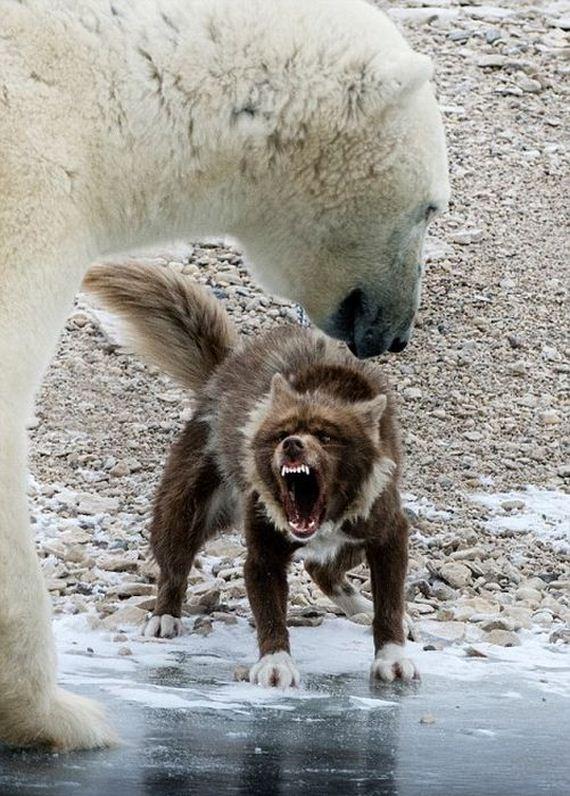 brave_dog
