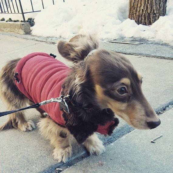 bun-dog