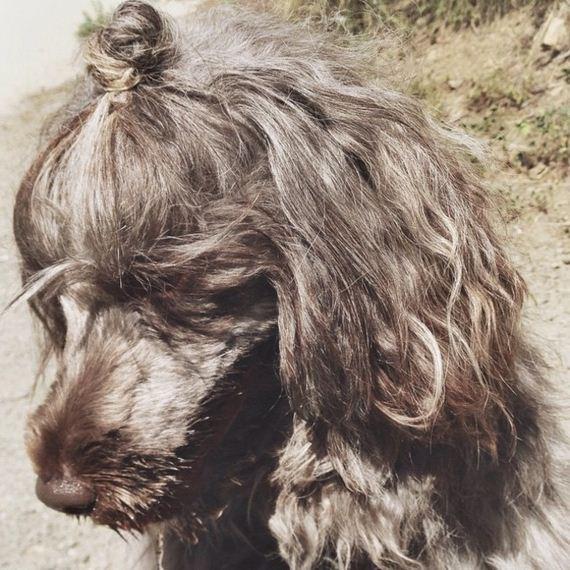 κουλούρι-σκύλος