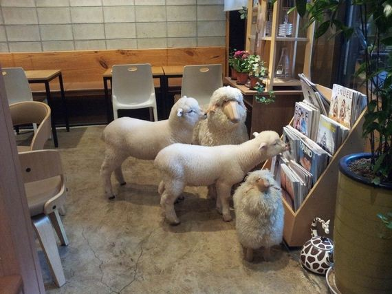 cafe-sheep