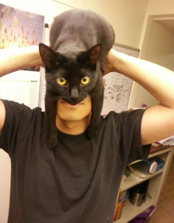 cat-hat