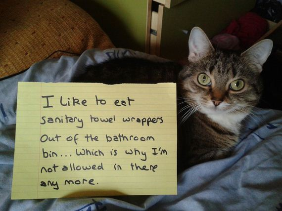 cat-shaming