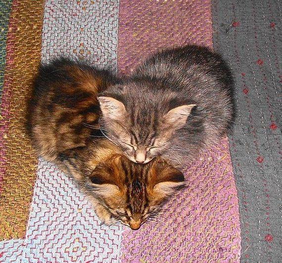 γάτα-σχήμα