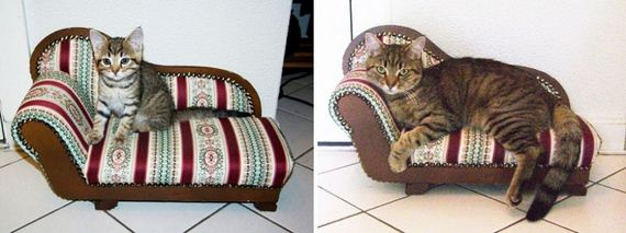 cats-who-grew-up-so-fast