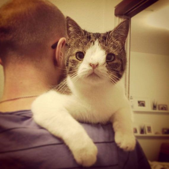 cute_cat