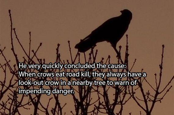 dead-crows