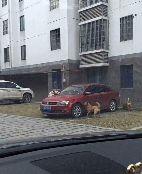 dog-driver-revenge