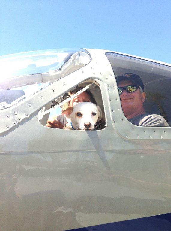 dog-rescue1