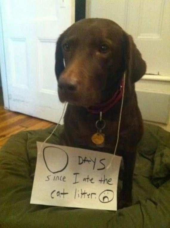 Pet Quotes Dog So Cute