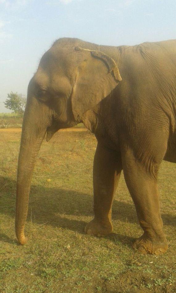 elephant-rescue