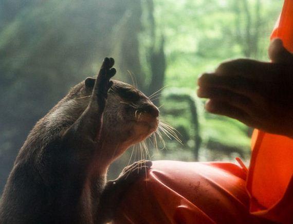 exhibit-japan-otter