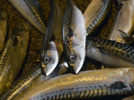 fish_spill