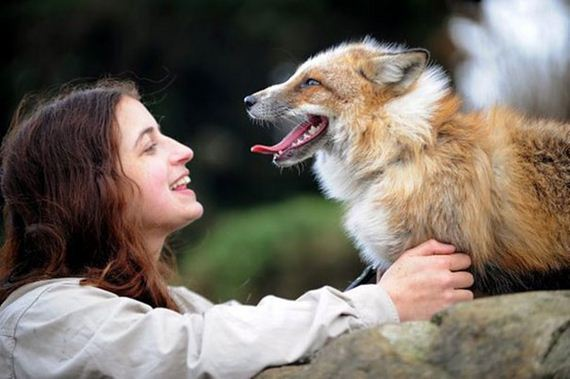 fox-story
