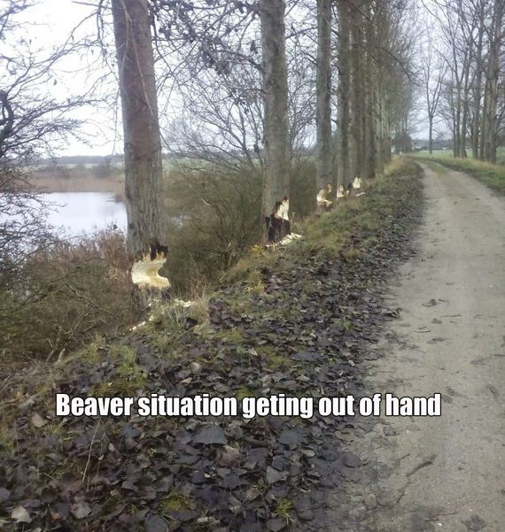 funny-pictures-855