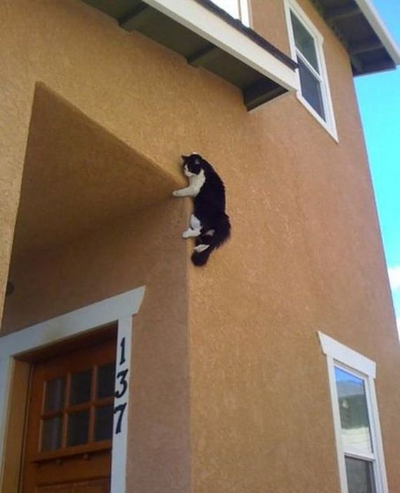 funny-pictures-893