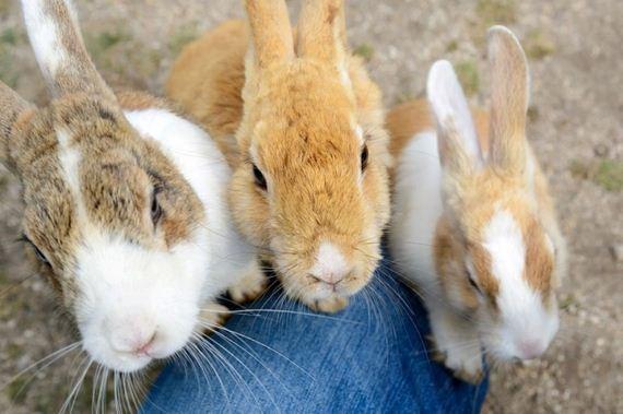 here-it-is-rabbit-heaven-in-japan-artnaz-com