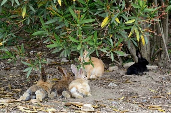 here-it-is-rabbit-heaven-in-japan-artnaz-com