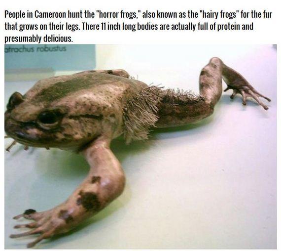horror_frog