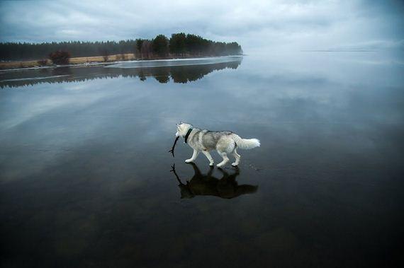 huskies-lake-play