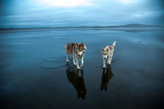 huskies-lake-play
