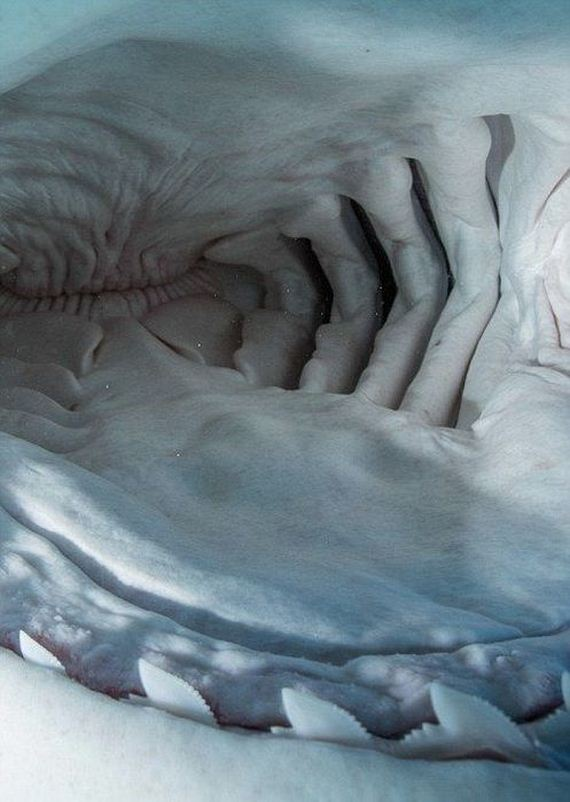 inside_shark_mouth