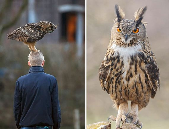 landing-owl