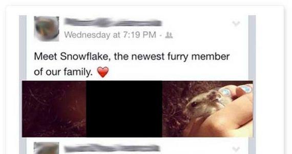 meet_snowflake