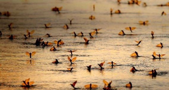 migration_photography