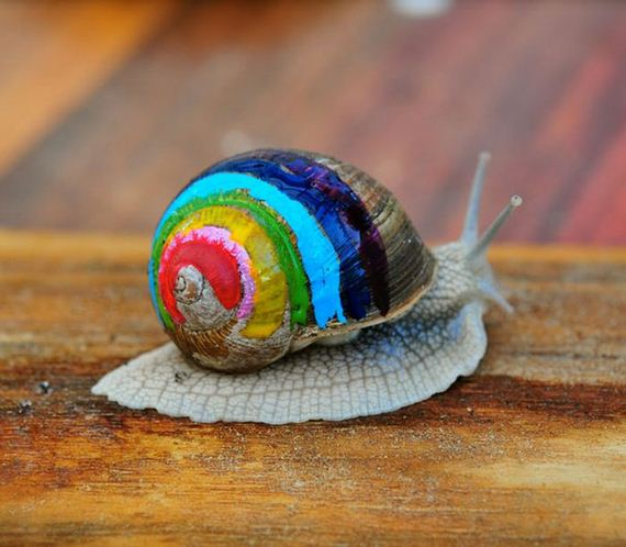 painted_snail_shells