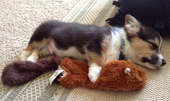 precious_puppies