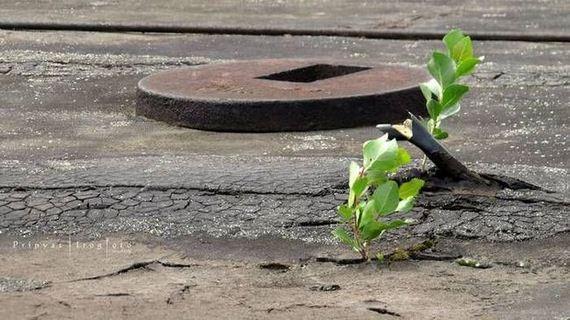 pripyats_new_nature