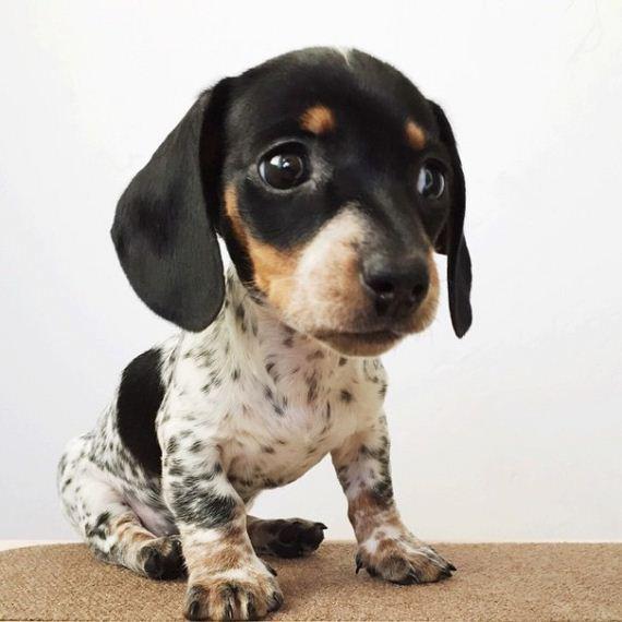 puppy_03