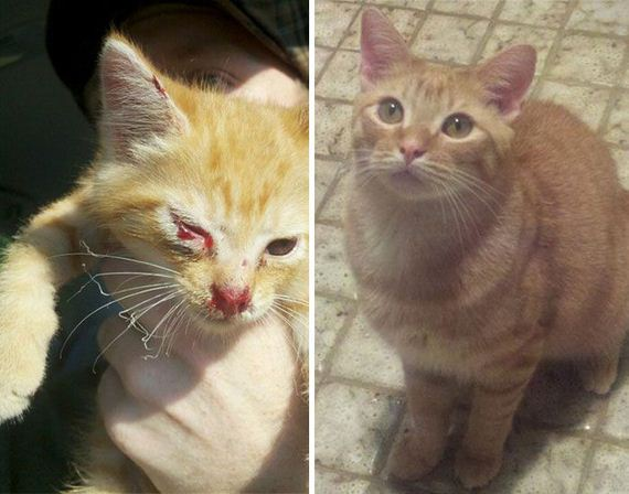 rescued_cats