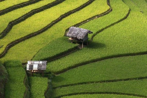 rice_field_photography