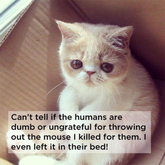 shower-thoughts-by-cats