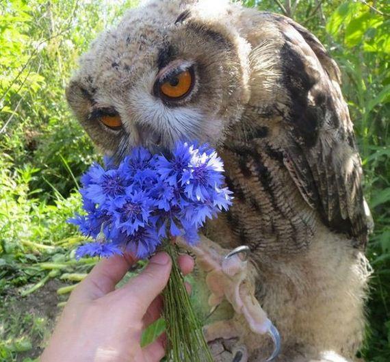 shy_owl