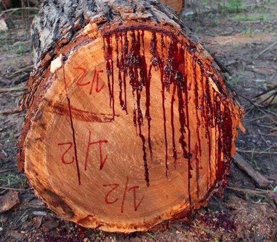 trees-tree