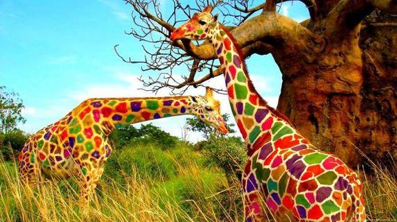 unusual_colored_animals