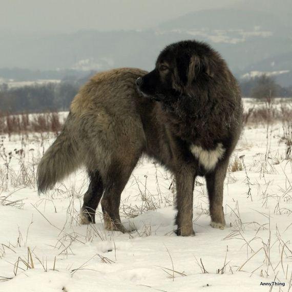 unusual_fur_markings_animals