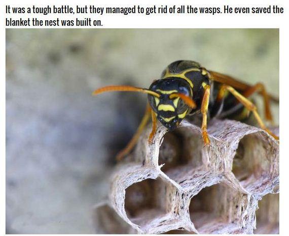 wasps_nest