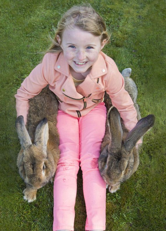 worlds_largest_rabbit