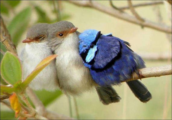 Birds-Cuddle