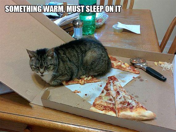 Cat-Logic