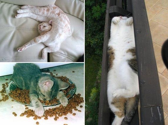 Cats-Monday