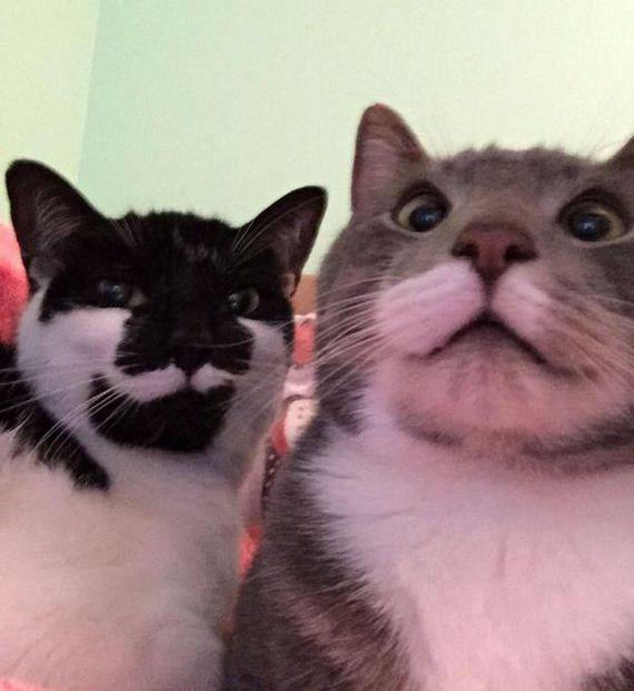 Enjoy-Kitties