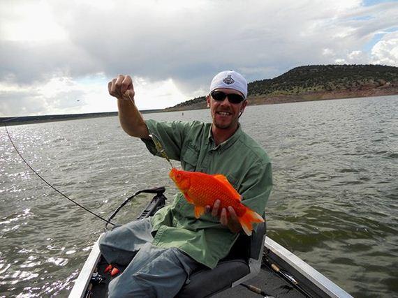 Goldfish-Lake