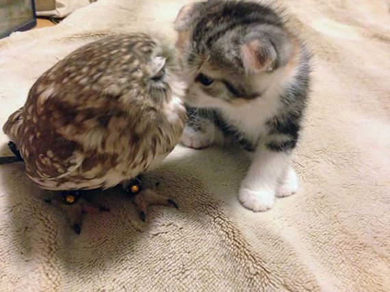 Owlet-friend-kitten