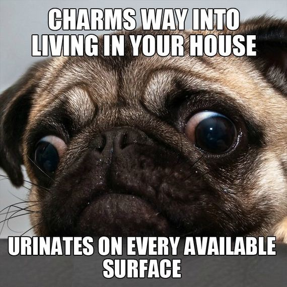 Scumbag-Pets