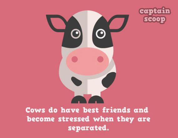 amazing_facts_animals
